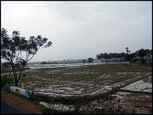 Plenty of Farms enroute Chidambaram