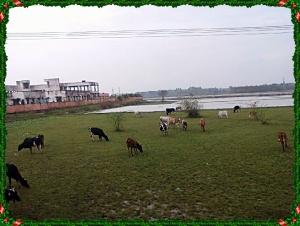 Meadows Enroute Chidambaram