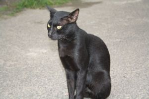 Black Cat on Jew Street