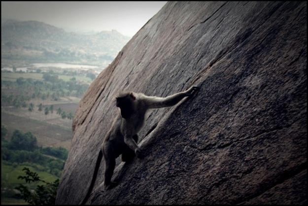 Monkey climbing down Anjaneya