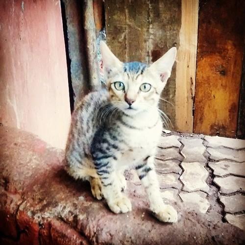 cat, kolad, nature