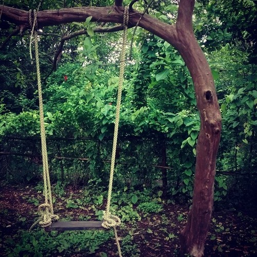 Swing at Ecotrail