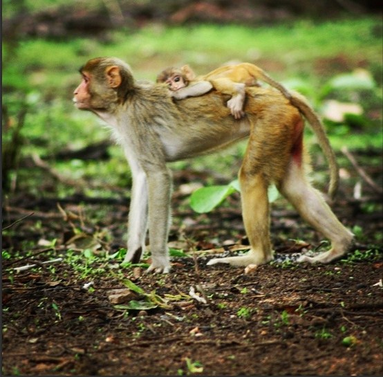 Monkey and Daughter