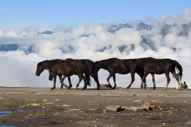 Rohtang Pass, Manali, Horses