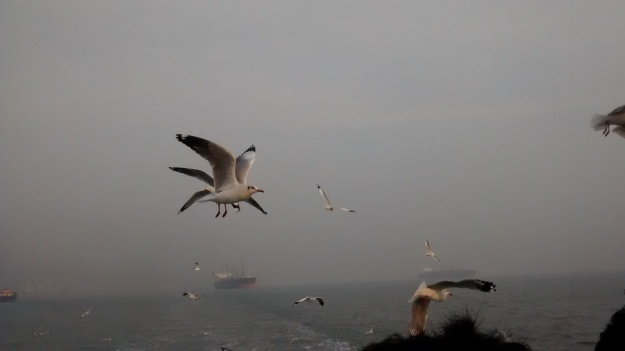 Birds accompanying you on the ferry1