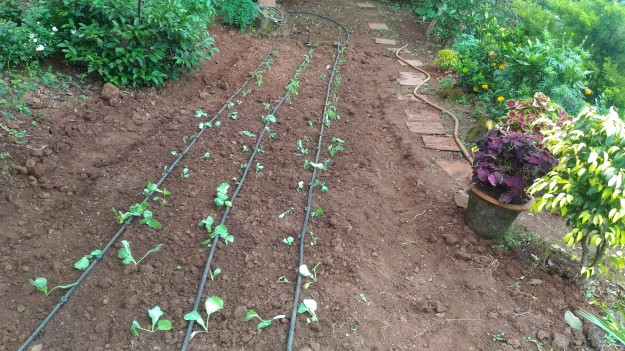 farm-planted-at-saffron-stays-verandah-by-the-valley